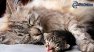 schlafende-katzen,-kleines-katzchen-167318
